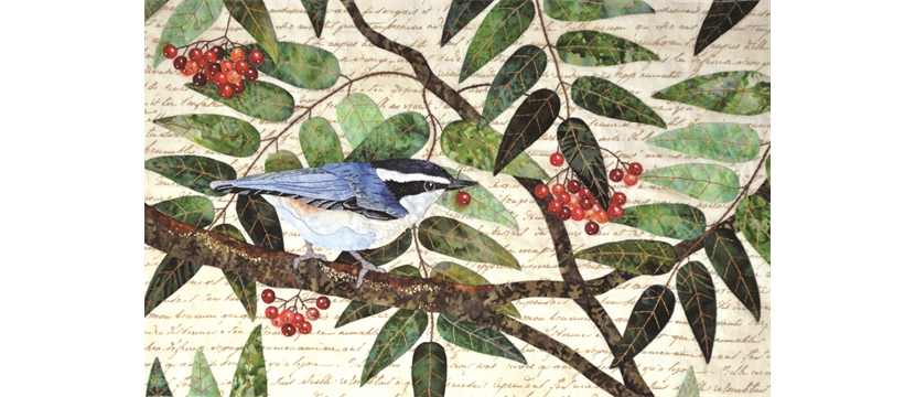 Naturalist's Notebook: The Nuthatch