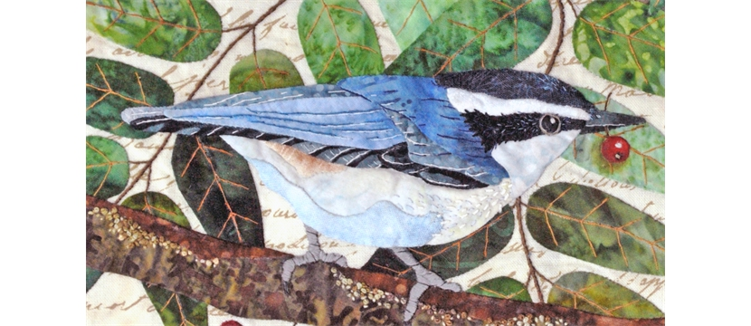 nuthatch_bird
